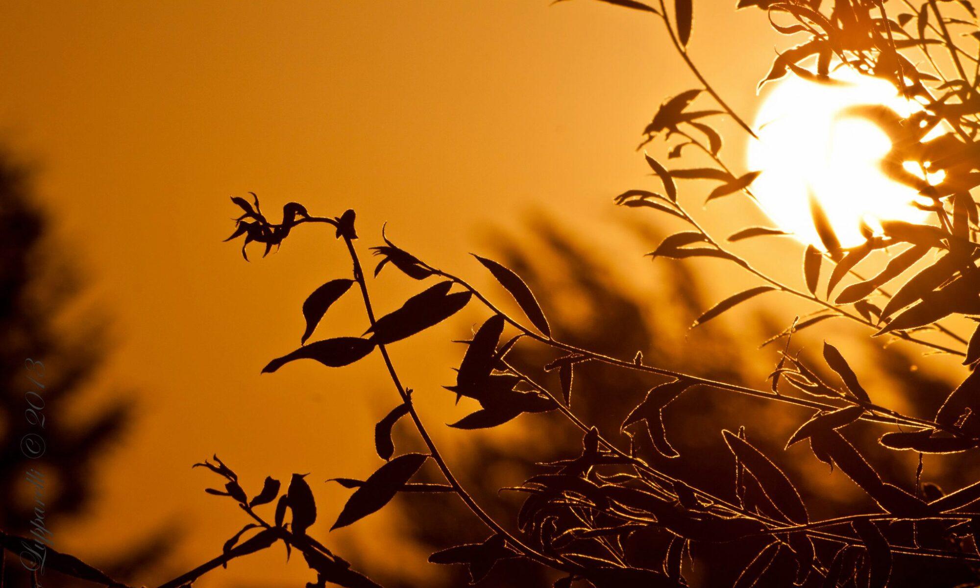 Posto del Sole